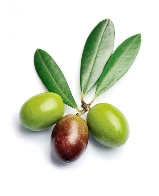 Hochwertige Oliven enthalten sekundäre Pflanzenstoffe, die wichtig eine gesunde Ernährung sind